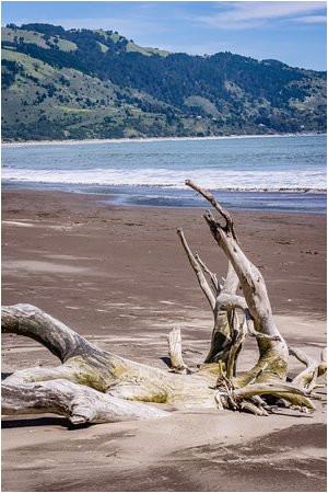 driftwood picture of bolinas beach bolinas tripadvisor