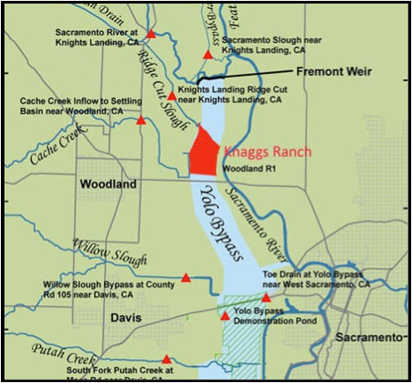 the nigiri concept salmon habitat on rice fields california trout