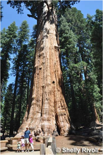 the 5 best places to visit california s giant redwoods and giant