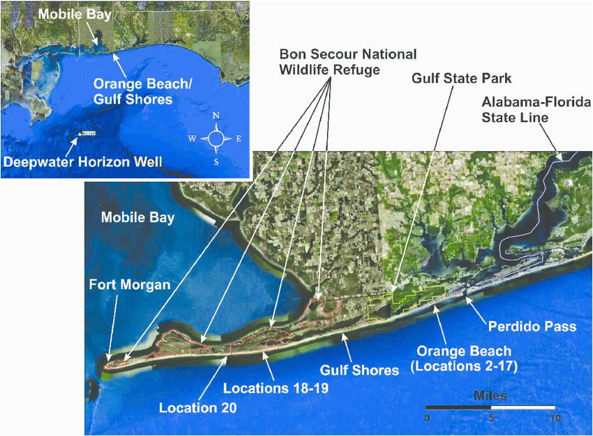 alabama s main gulf facing sandy beach shoreline and sampling