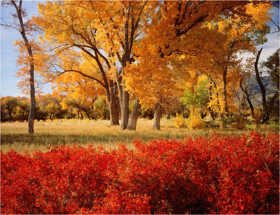 a state by state guide to fall colors