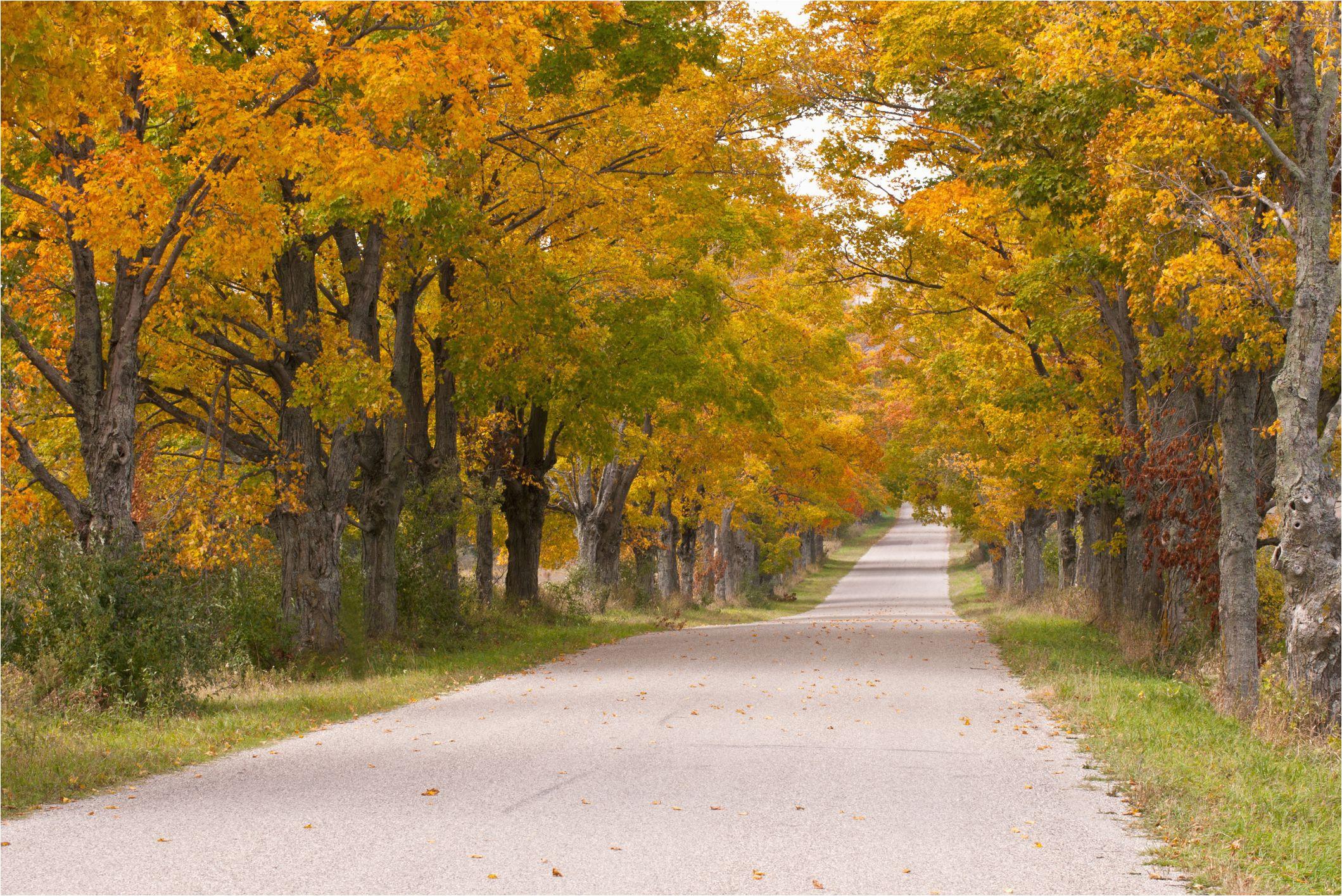 fall foliage tours in michigan