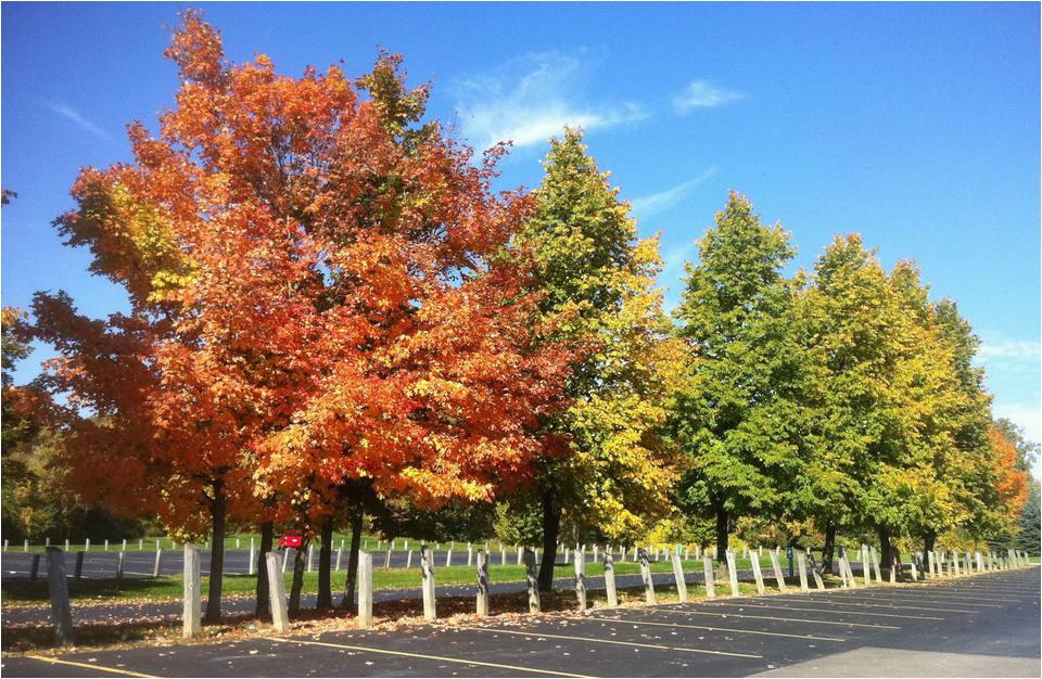 Michigan Leaf Color Map Fall Foliage tours In Michigan