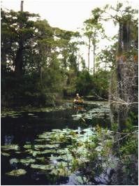 44 best okefenokee swamp ga images on pinterest georgia on my mind