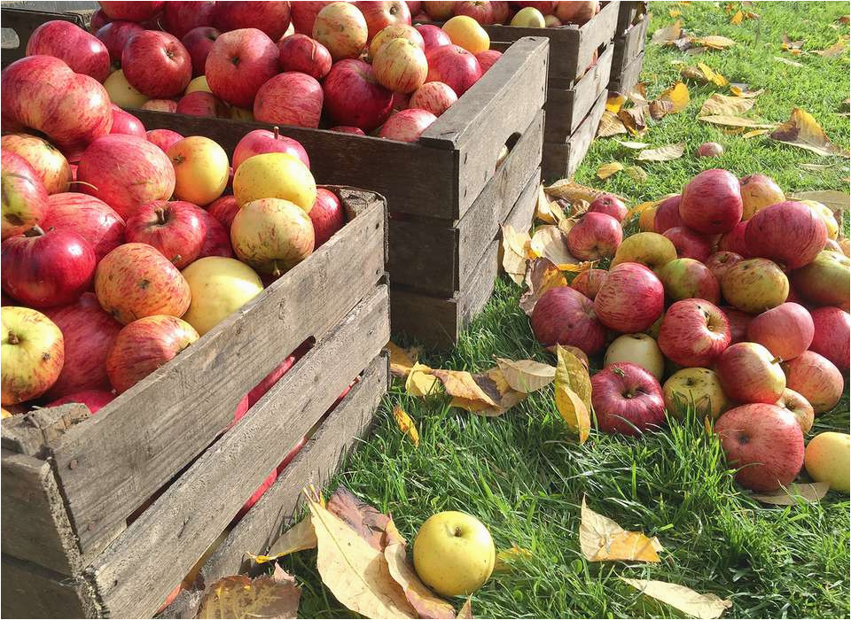 fall events at apple hill farms