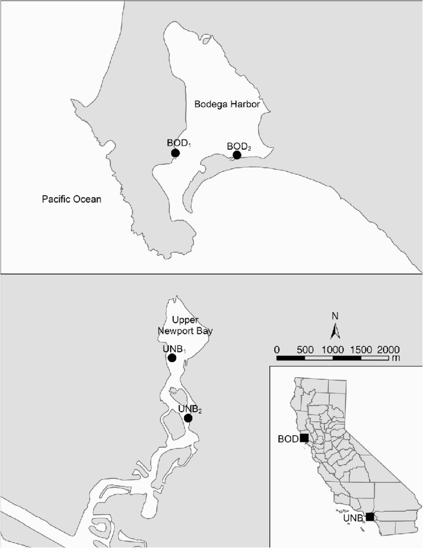map showing study sites in bodega harbor bod and upper newport bay