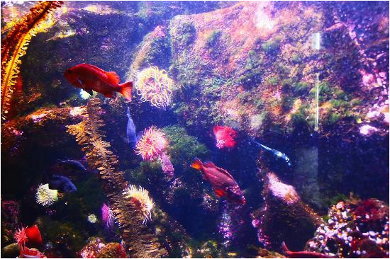 underwater color picture of oregon coast aquarium newport