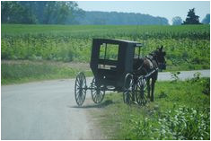 12 delightful amish in ethridge tn images amish country amish