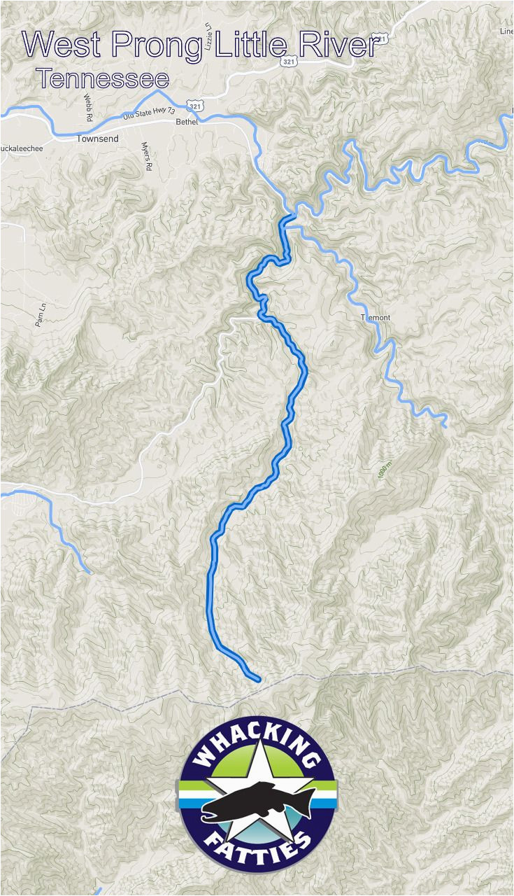 west prong little river fishing report tennessee fishing reports