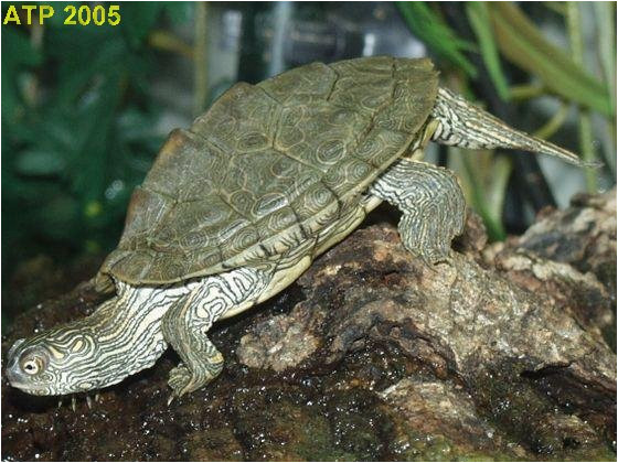texas map turtle care business ideas 2013