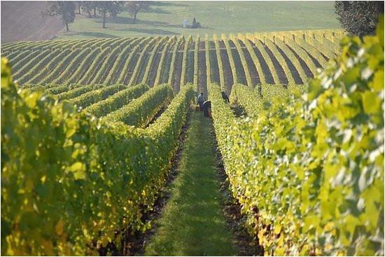 the 10 best texas wineries vineyards with photos tripadvisor