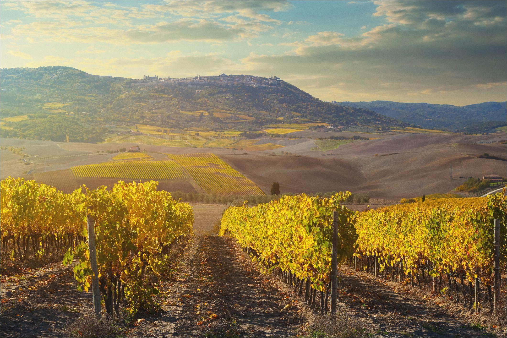 the 8 best montalcino wine tours of 2019