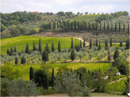 tuscan vineyard tours piombino aktuelle 2019 lohnt es sich