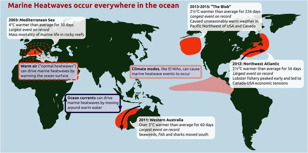 ocean heatwaves are getting longer and more intense