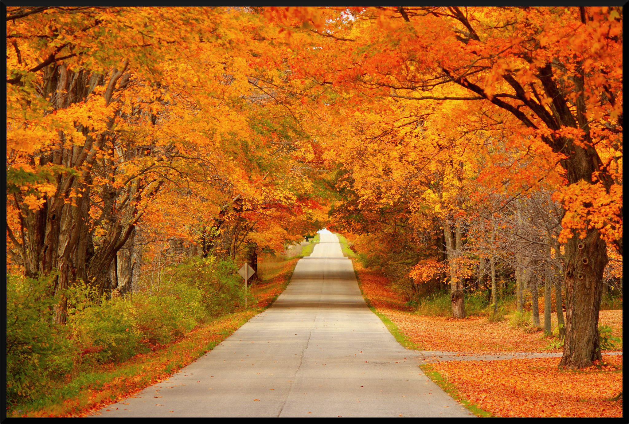 fall colors science spray ideas wisconsin fall colors fall