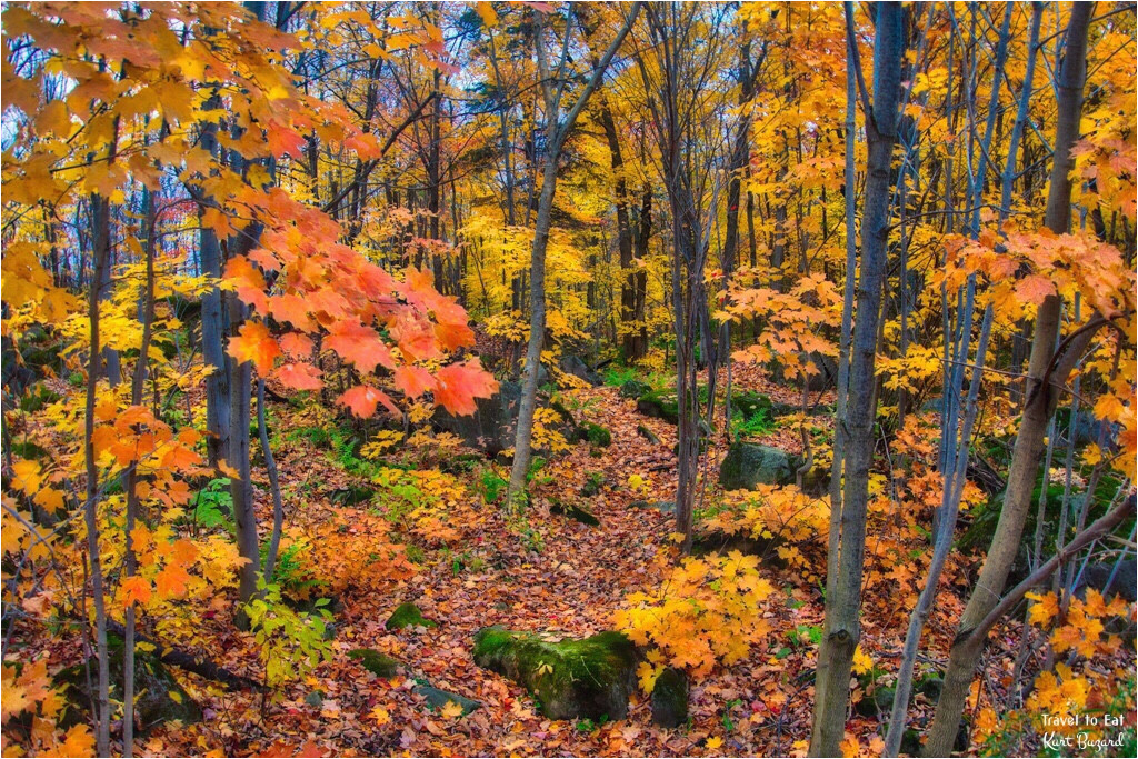 fall foliage in quebec travel to eat