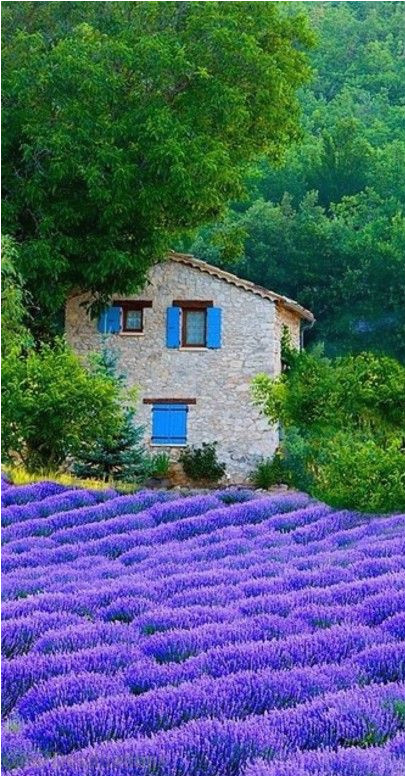telephoto lenses up close and personal france lavender