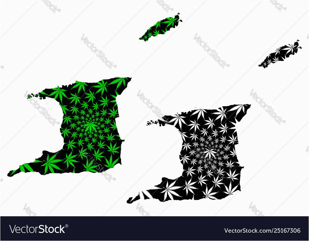trinidad and tobago map is designed cannabis vector image