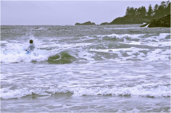 catching a wave in tofino picture of pacific surf school tofino