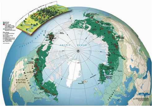 boreal forest map geography in 2019 forest map map