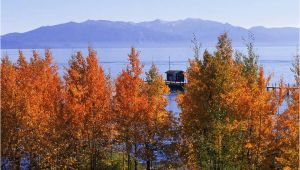 California Fall Foliage Map where to See Fall Color In the Lake Tahoe Region