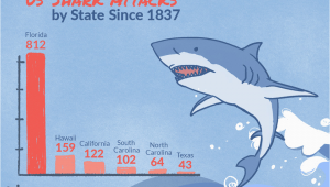 California Shark attack Map Shark attacks In the United States by State