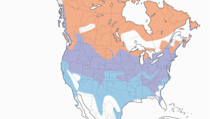 Canada Goose Migration Map Canada Goose Distribution Migration and Habitat Birds