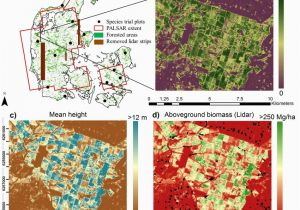 Canada Vegetation Map A forested areas In Denmark Map Provided by