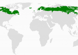 Canada Vegetation Map Boreal forest Of Canada Wikipedia