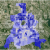 Crime Map Texas Colorado Springs Neighborhood Crime Map Relocation Map for Denver