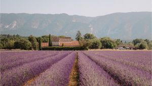France Lavender Fields Map south Of France Provence Guide Find Us Lost