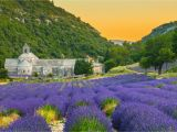 Lavender Fields France Map the 10 Best Things to Do In Provence France