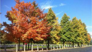 Michigan Fall Foliage Map Fall Foliage tours In Michigan