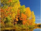 Michigan Leaf Color Map 49 Best Wisconsin S Fall Color Images Wisconsin Wisconsin Fall
