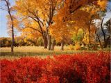 Michigan Leaf Color Map A State by State Guide to Fall Colors