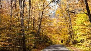 New England Foliage 2014 Map A Scenic Drive In Western Maine New England Fall Foliage