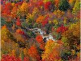 North Carolina Fall Foliage Map 123 Best Fall Beautiful Season In north Carolina Images Nature
