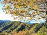 North Carolina Fall Foliage Map 200 Best Fall Color In Nc Mountains Images Nc Mountains Blue
