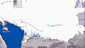 Polar Bears In Canada Map Tracking Polar Bears In the Beaufort Sea November 2014 Map