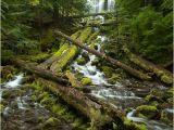 Proxy Falls oregon Map One Of oregon S Most Photogenic Waterfalls Roadtrippers 3 Hours