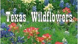 Texas Wildflower Map 13 Best Texas Wildflowers Images In 2019 Texas Texas Travel