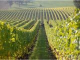 Texas Wineries Map Hill Country the 10 Best Texas Wineries Vineyards with Photos Tripadvisor