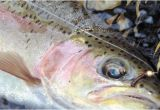Trout Fishing In Tennessee Map A Guide to Georgia Trout Fishing