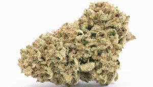 Weed Maps Colorado Perennial Holistic Wellness Center Studio City Ca Marijuana