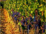 Wineries In Tuscany Italy Map Zenjaxty Beauty Italy tours Tuscany Italy