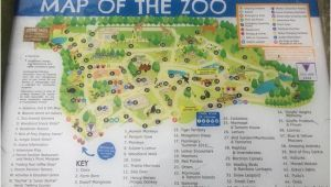 Zoos In England Map Map Of the Zoo Picture Of Banham Zoo Tripadvisor